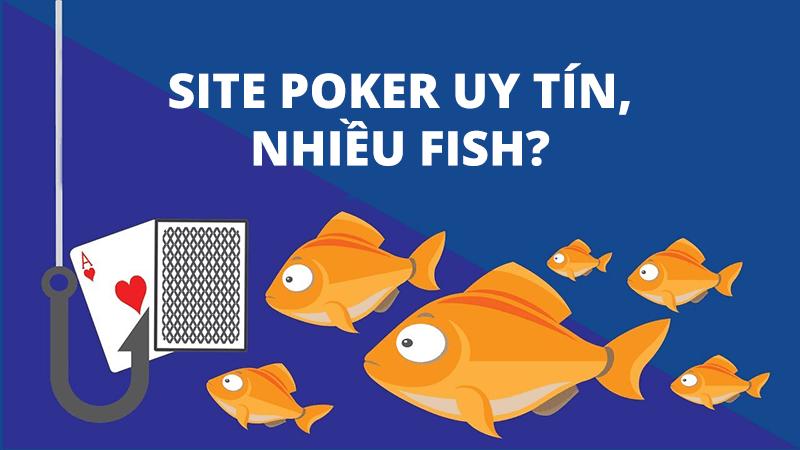 Chia sẻ site poker uy tín và nhiều fish nhất